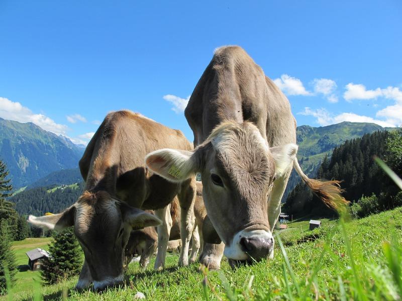 Неизведанная Австрия